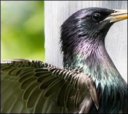 bird control Anna