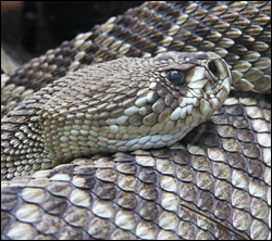 snake removal Anna