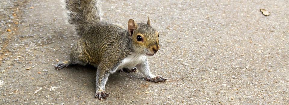 Aldine squirrel control